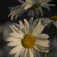 мой сад :: Vitaliy Kononov