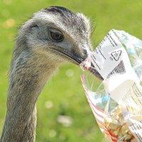 Любитель попкорна :: Alexander