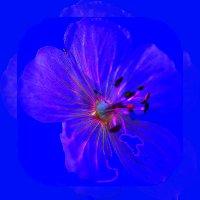 Медуза или цветок :: Владимир Хатмулин