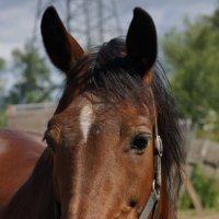 Конь :: Ирина Гринченко