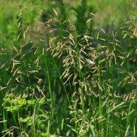 в траве :: Августа