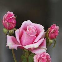 цветы любви. :: Alefikleev