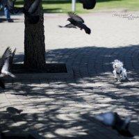 Ловец птиц :: Роман