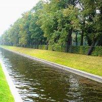 Лебяжья канавка,Летний сад, Санкт-Петербург :: Lyubov Zomova
