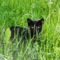 Затерялся в траве :: Виктория Поплавская