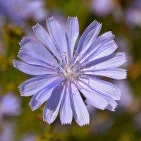 цветок :: Zahran М