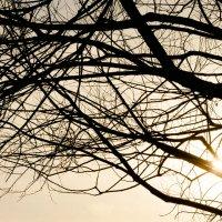 Tree :: Сергей Каверин