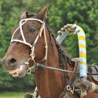 Ржу как лошадь! :: Ирина Данилова