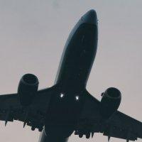Наблюдая за полетом :: Марина Мурашова