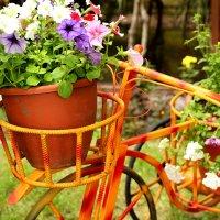 Велосипед :: Дмитрий Арсеньев