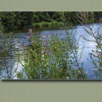 У водоема летом (3) :: Владимир Кроливец