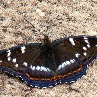 Бабочка :: Айвар Поппель