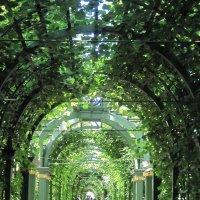 Летний сад. Берсо. :: Маера Урусова