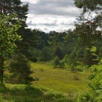 лес :: ник. петрович земцов