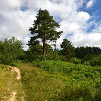 дорога в лесу :: ник. петрович земцов