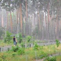Летний дождь в лесу :: Диана Задворкина
