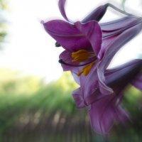Цветок. :: Андрей