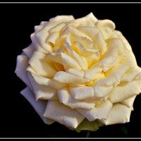 Роза :: Лиза ....