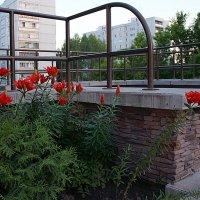 Лилейник в интерьере поселения :: Наталья Золотых-Сибирская