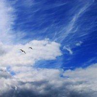 Огромное небо одно на двоих... :: Галина Стрельченя