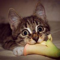 жадный котенок :: Дмитрий Гладков