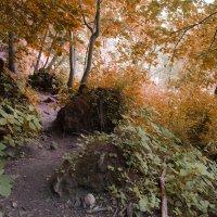 Лесной пейзаж :: Сергей Филимончук