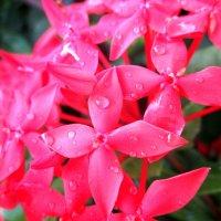 Аленький цветочек... :: Елена Байдакова