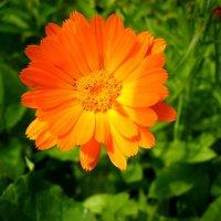 Оранжевое настроение :: Дмитрий Арсеньев