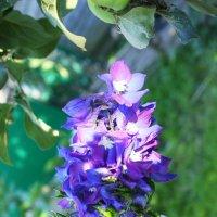 Цветы :: Любовь Нефёдова