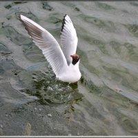 грация :: linnud