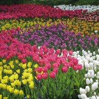Улыбка весны... :: Барбара