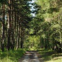 Лесные дороги :: василий