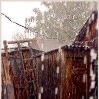 Дождь и капуста... :: Кай-8 (Ярослав) Забелин