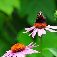 Аэродром для бабочек :: Андрей Куприянов