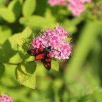 Яркая бабочка :: Aнна Зарубина