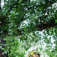 Невеста :: Елена Стерхова