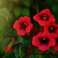 Цветы :: Алёна Жила