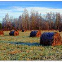 Вот и заморозки по утрам... :: Федор Кованский