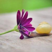 Любовь к прекрасному :: Ольга Диброва