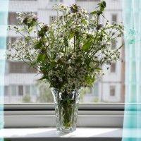 Лучше смотреть на цветы :: Наталия Лыкова