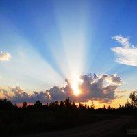 Солнце, как прожектор.. :: Антонина Гугаева