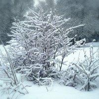 Апрельский снегопад. :: Любовь Чунарёва