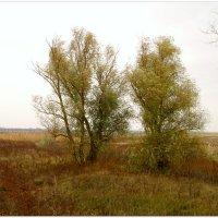 Осень на холсте природы... :: Тамара (st.tamara)