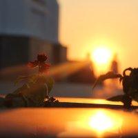 солнечные цветы :: Лиза Игошева