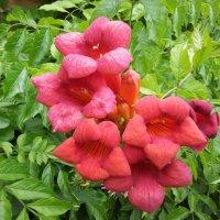 цветы :: natali
