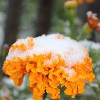 Первый снег на моих цветах :: Ирина Сорокина