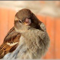 задумчивый :: linnud