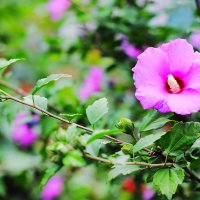 Я красотой цветов пленяться не устал... :: Юрий Гайворонский