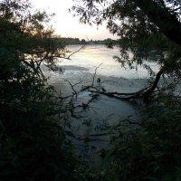 Заболоченный пруд :: Анастасия Ляхина