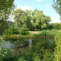 Лесное озеро :: Roman V